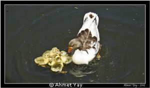Mom and her ugly ducklings...